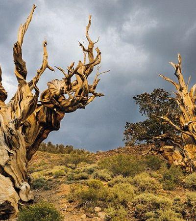 Estas são algumas das árvores mais incríveis do mundo