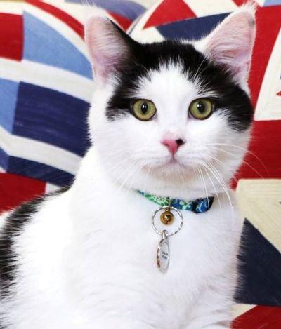 Conheça Lawrence, o primeiro gato diplomata da história