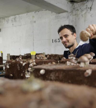 Fazenda de cogumelos em estacionamento de condomínio em Paris é um novo modelo de agricultura urbana