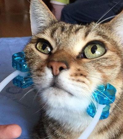 O massageador de gatos que deixa os bichanos totalmente relax