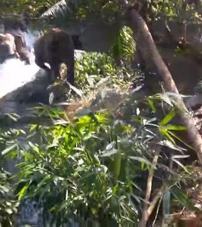 Esta família de elefantes celebrando o resgate de um filhote é a coisa mais adorável