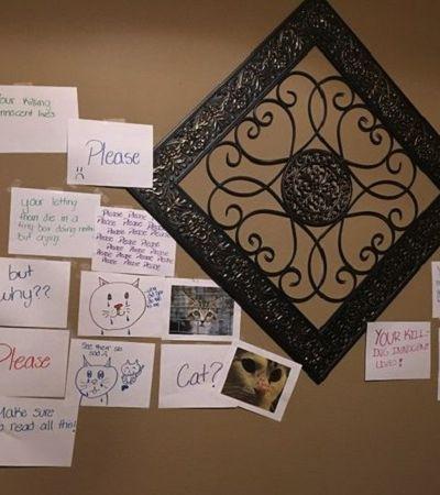 Ela criou um 'muro das lamentações' dentro de casa para convencer o pai a adotar um gato