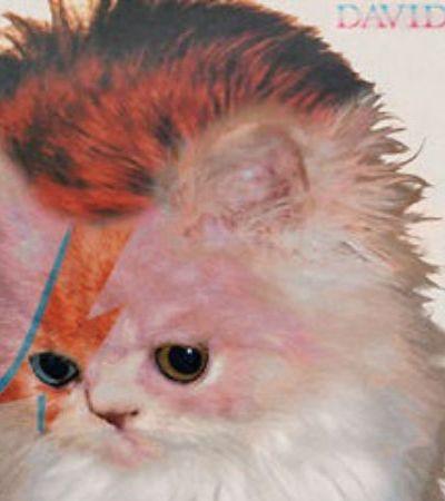 Alguém decidiu trocar músicos famosos por gatos na capa de álbuns clássicos
