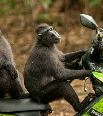 'Comédia da Vida Selvagem': Concurso premia as fotos de animais mais engraçadas de 2017