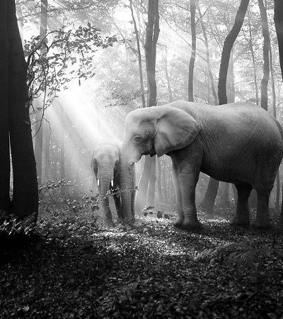 "Ele ""libertou"" animais do zoológico usando Photoshop"