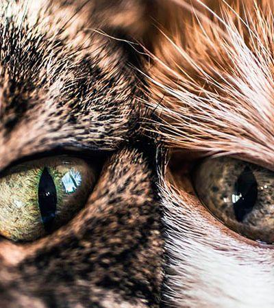 Esta fotógrafa não para de clicar seus dois gatinhos e o resultado é pura fofura