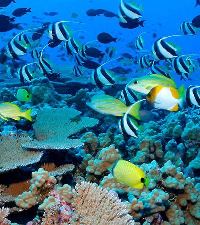 Mergulhe no Centro de Biologia Marinha da USP com visitas guiadas e gratuitas