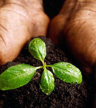 Conheça a BitSeeds, a moeda virtual que quer plantar 1 bilhão de árvores