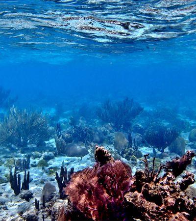 Belize bane a extração de petróleo em suas paradisíacas praias