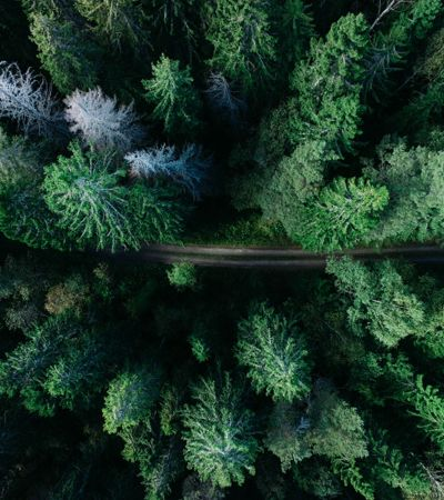 Do tamanho da Irlanda: China cria uma nova floresta com 6,6 milhões de hectares