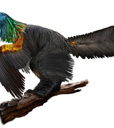 Penas, cauda e muitas cores: Há 161 milhões de anos, Terra teve dinossauro 'arco-íris'