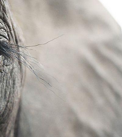 Fotógrafo viaja 2 anos para registrar animais que podem ser extintos pela ação humana
