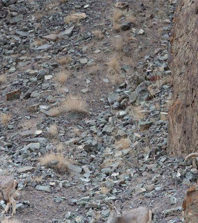 Wally level hard: Você é capaz de encontrar um leopardo nestas imagens?