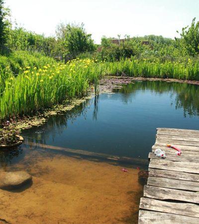 Como funcionam as piscinas biológicas, que substituem cloro por plantas