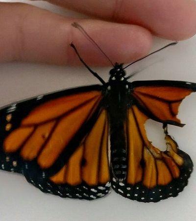 Designer de roupas conserta asa quebrada de borboleta e o resultado é impressionante