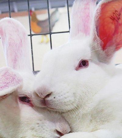 Absurdo: Governo de MG autoriza uso de animais em testes para cosméticos