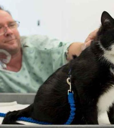 Este é Duke Ellington, o gato que cuida de pacientes de um hospital dos EUA ronronando