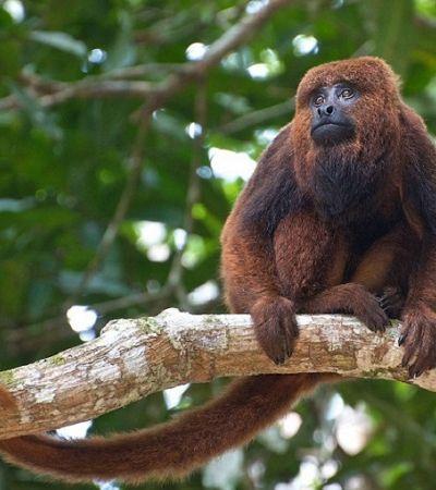 Morte de macaco por febre amarela fecha Zoológico, Safari e Jardim Botânico em São Paulo