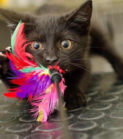 Pessoas estão devolvendo gatos pretos a abrigos por eles 'não ficarem bem em fotos'