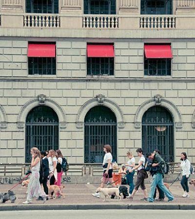 Cãonhecendo SP: São Paulo terá city tour para cachorros em seu aniversário