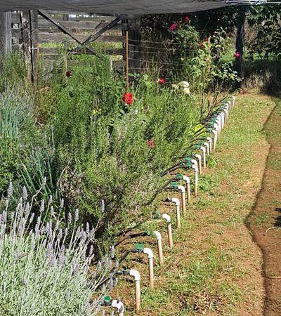 Plataforma permite que você 'adote' hortas orgânicas e recebe seus alimentos em casa