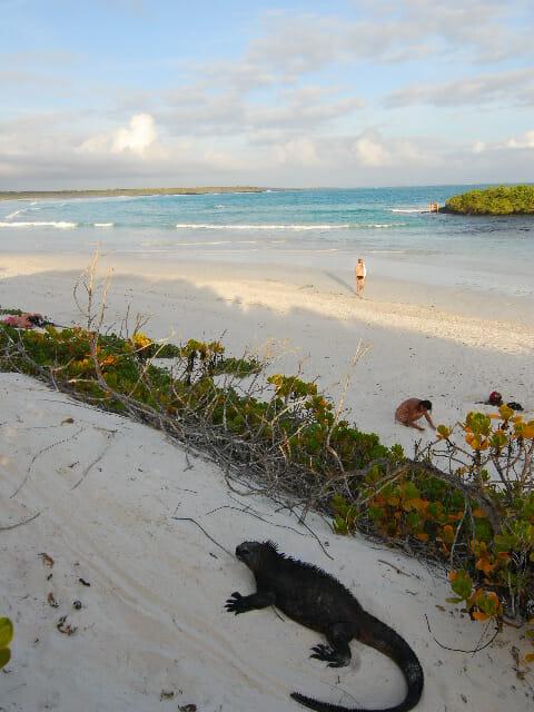 O arquipélago de Galápagos é deslumbrante