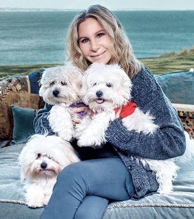 Barbra Streisand revela ser dona de filhotes clonados de cachorro
