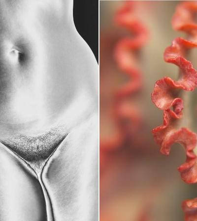 Artista plástica cria série fotográfica NSFW que 'compara' pepekas à suculentas