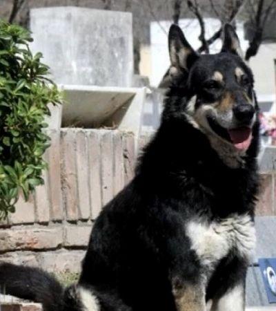 Morre Capitán, cachorro que ficou 11 anos visitando diariamente o túmulo de seu tutor