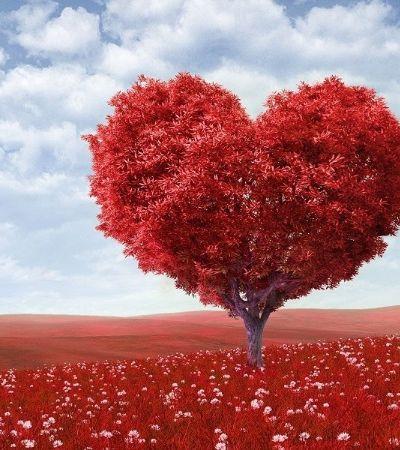 Linguista diz ter encontrado pelo mundo 14 'sabores' diferentes de amor
