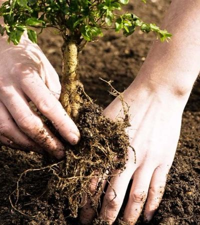 Reino Unido investe 150 milhões na capacitação de pequenos produtores brasileiros