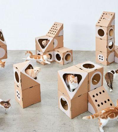 Casal de arquitetos cria 'cidade dos gatos' feita de papelão e os felinos vão à loucura