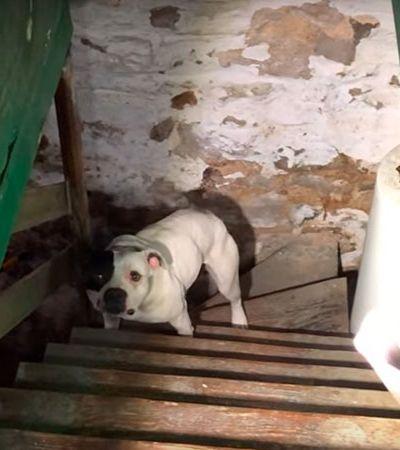 Homem se muda e acha cão acorrentado sem comida e água. Veja reação do animal ao ser resgatado