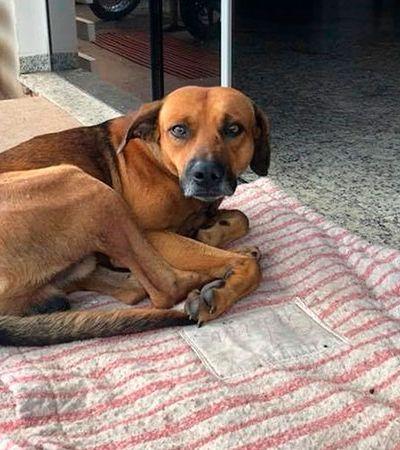 Cão está há 4 meses esperando dono na porta do hospital após seu falecimento