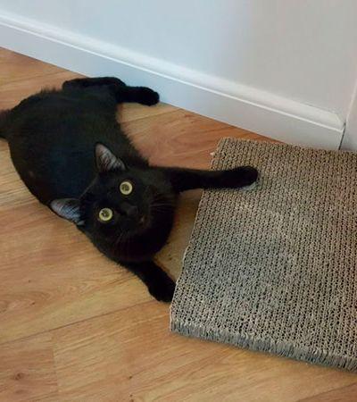 'Pantera Negra' está ajudando gatos pretos a serem adotados