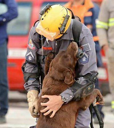 A linda despedida da cachorra Milka, que trabalhou 8 anos com o Corpo de Bombeiros