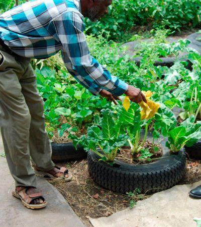 Curso gratuito de agricultura urbana na cobertura da Galeria do Rock