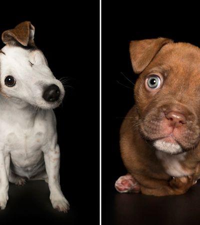 Série fotográfica prova que animais com deficiência também são o máximo