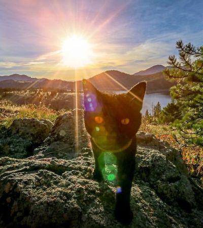Conheça o gato aventureiro que há dois anos cai na estrada com seu humano