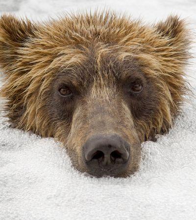 Fotógrafo russo se especializa em fotos em close de ursos livres na natureza