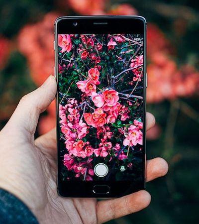 'Shazam da natureza': App reconhece espécies de plantas e animais em suas fotos