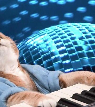 Bento, mundialmente conhecido pelo meme do 'Keyboard Cat', morreu
