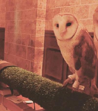 Shopping Eldorado é acusado de maus tratos aos animais em exposição de Harry Potter