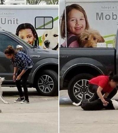 Cães abandonados pelos donos sendo levados a abrigos em imagens de partir o coração