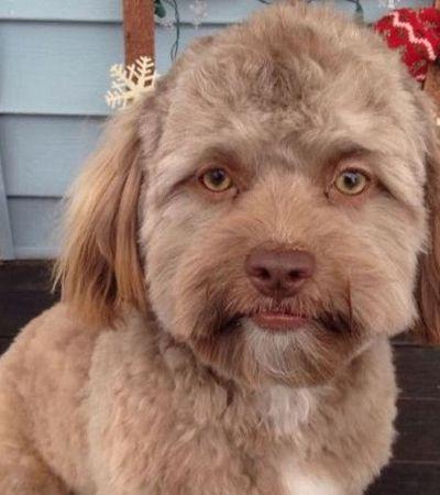 As feições humanas deste cão estão deixando as pessoas confusas