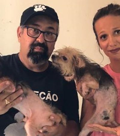 Luisa Mell resgata 113 animais mantidos em local clandestino: 'Um pesadelo'