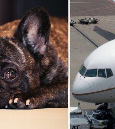 Cão morre em compartimento de bagagens após orientação equivocada de comissário