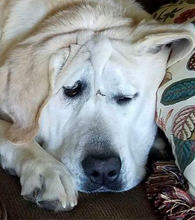 Cão abandonado por ser 'feio' é adotado e tem mudança de comportamento inacreditável