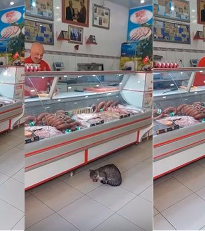 Açougueiro serve petiscos para seu cliente felino curioso