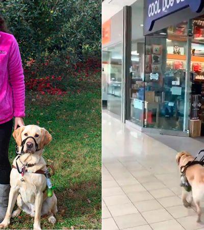 Cão-guia espertinho leva tutora para pet shop sem que ela perceba